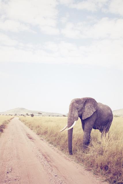 http://jjnorris.com/files/gimgs/65_elephant.jpg